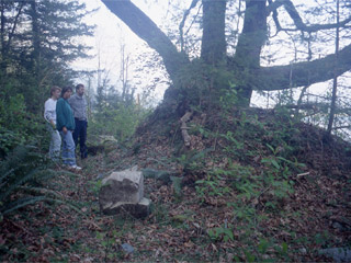 Three people stand beside an earthen mound with a large maple growing out of it .