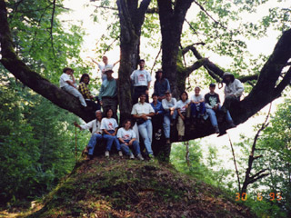 A group of students pose for a photograph, sitting along the lower branches of a large maple tree.
