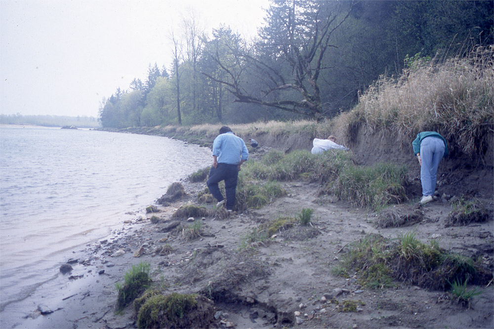 Three people are walking along a riverbank. They look at the ground as they try to find ancient basketry remains.