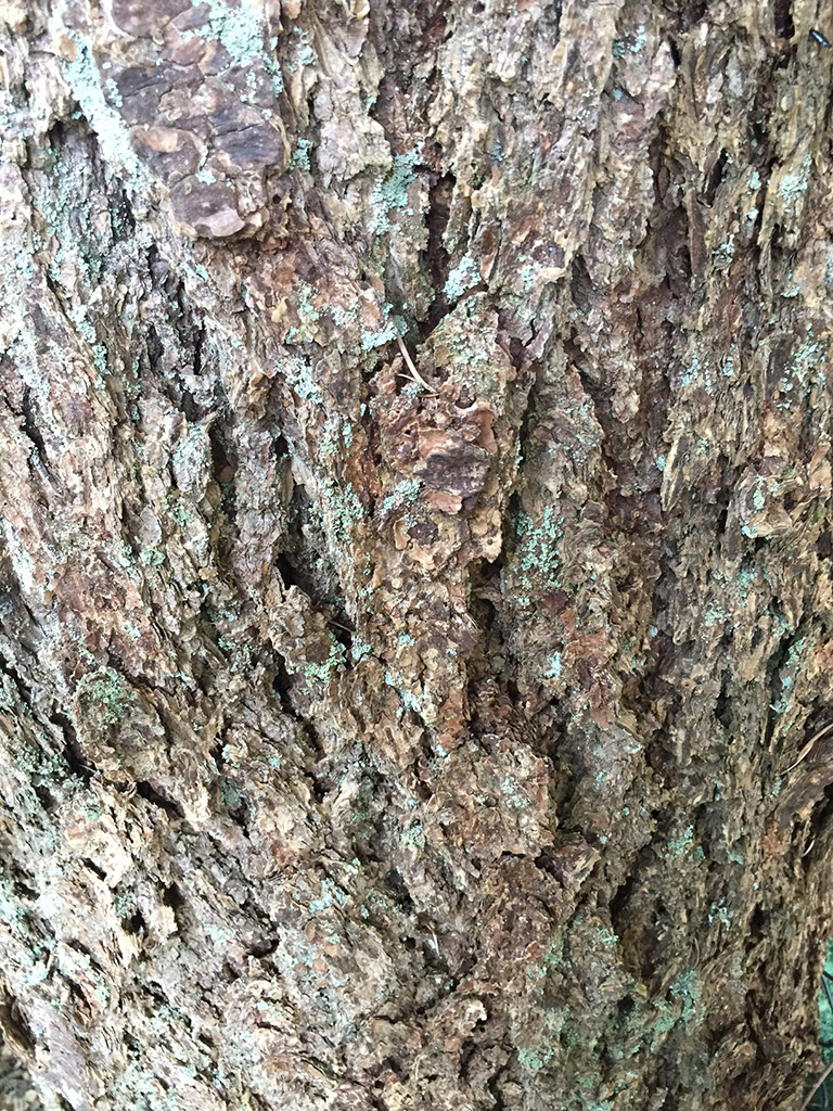 A close-up of rugged bark.