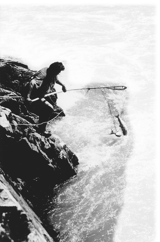 A black and white photograph of a man standing on a rock near the river, holding onto a long-handled fishing net with a fish inside it.