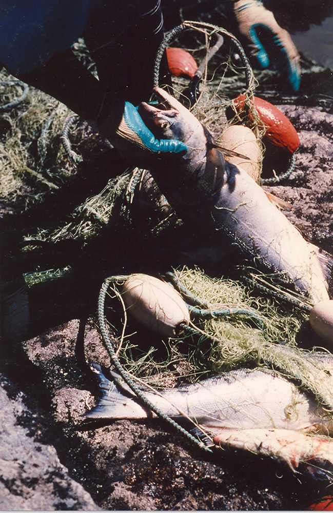 A person wearing gloves removes a live salmon from a tangled net on the shore.