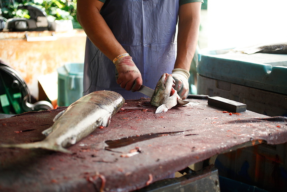 A man holds a freshly-butchered fish head against the table, cleaning it with his knife.
